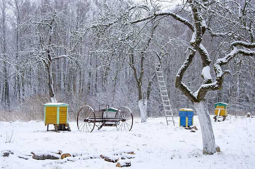 Je-li v lednu sníh, bude dobrá úroda