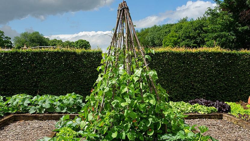 Jak přitáhnout děti k zahradničení? Vsaďte na fazole! 6