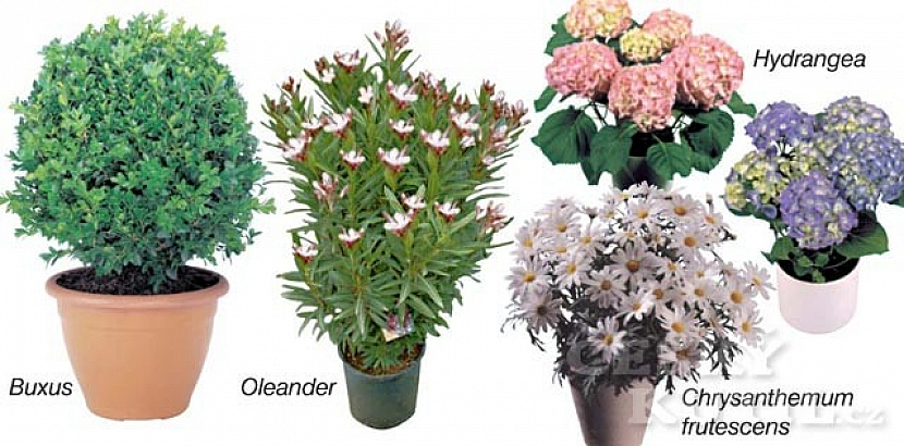 Rostliny pro balkony, terasy a zahrady