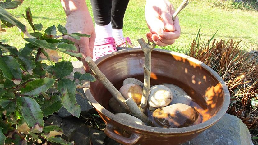 Jak oživit zahradu a udělat radost zpívajícím návštěvníkům: Pítko pro ptáčky 5