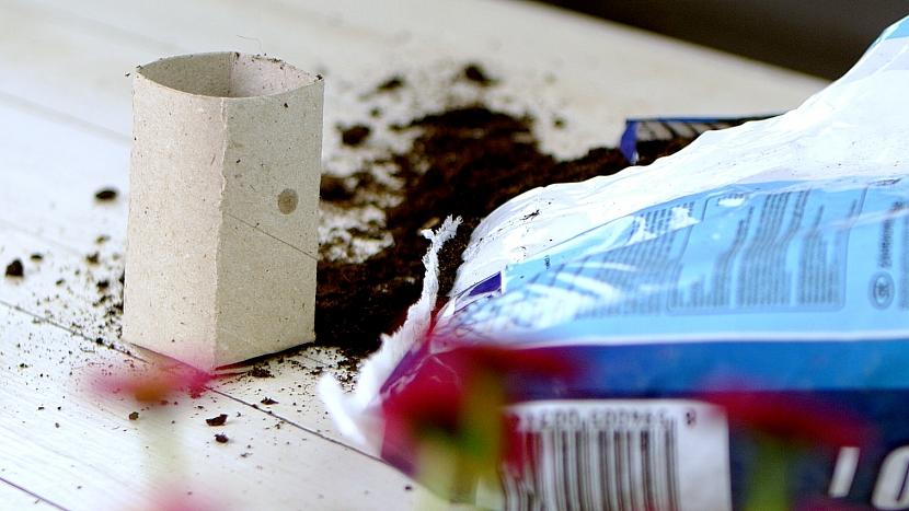 Jak vysadit semínka do květináčků z ruliček od toaletního papíru 4