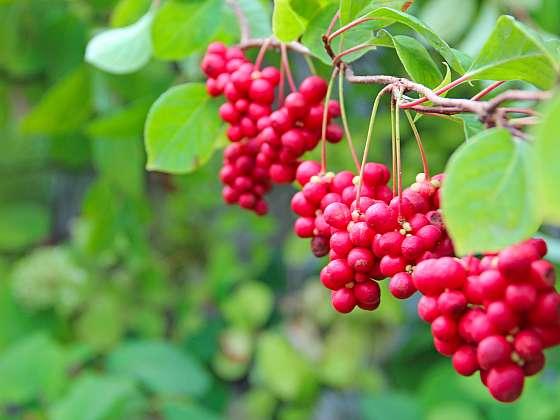 Víte, kterou rostlinou si uklidníte pocuchané nervy? (Zdroj: Depositphotos (https://cz.depositphotos.com))