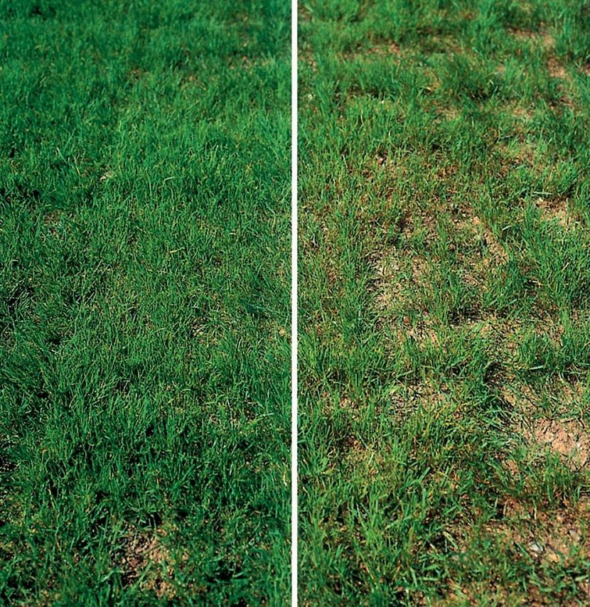 Mezi základní péči o trávník na jaře patří vertikutace - provzdušnění trávníku
