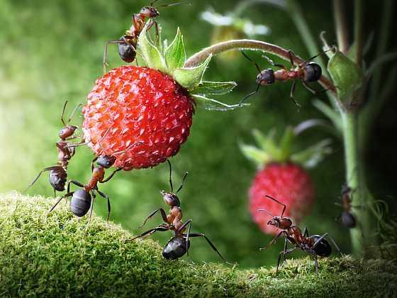 Jak se zbavit mravenců na zahradě (Zdroj: Depositphotos)