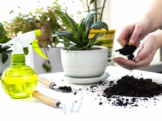 Pokojové rostliny a volba vhodného substrátu (Zdroj: Depositphotos)