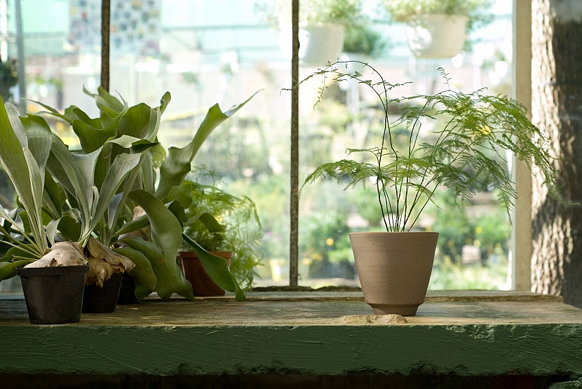 Květiny na okně