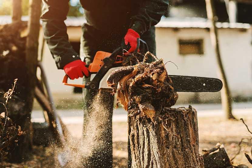 Jsou případy, kdy ke kácení stromů povolení nepotřebujete. Víte, v jakých případech?