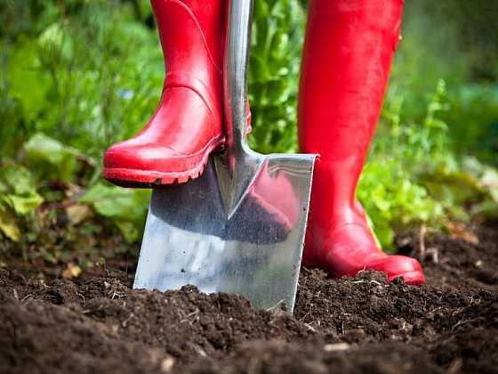 Mykorhizní přípravky pro pěstování rostlin aneb jak na pěstování rostlin bez chemie