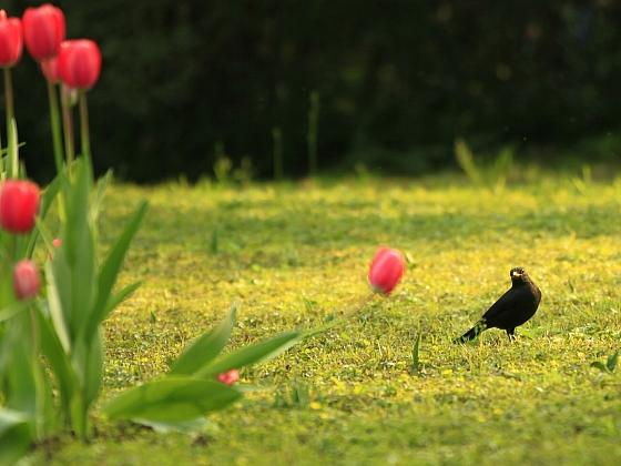 Čím odradit ptáky od jarních rostlin? (Zdroj: Depositphotos)