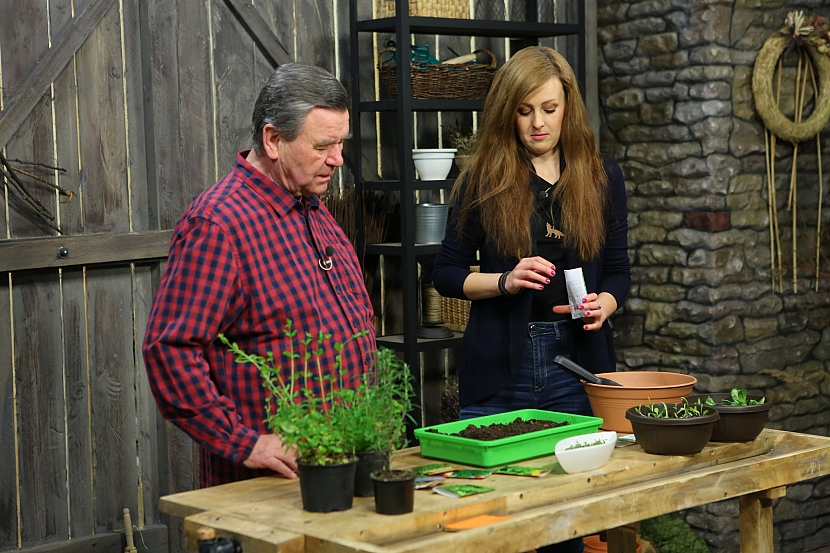 Výsev bylinek do pěstební misky