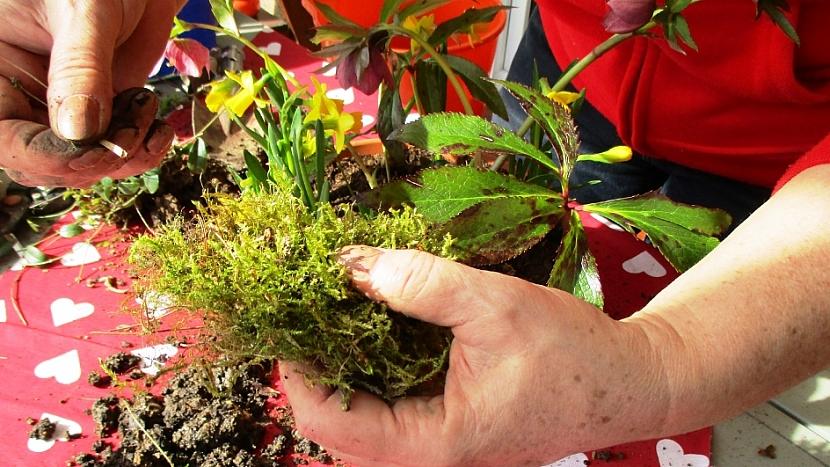 Jak si udělat minizahrádku aneb dopřejte si jarní květinový doping 6