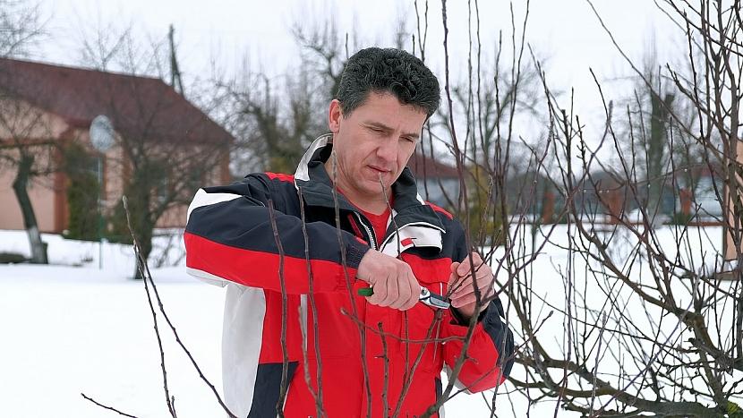 Zahrada v únoru: vobdobí vegetačního klidu se provádí zimní řez jádrovin
