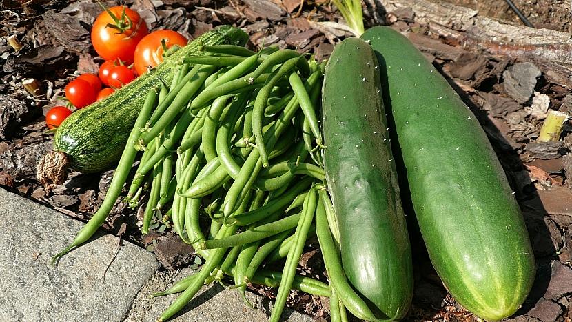 Předpověď počasí a zahrada: sklízejte okurky, cukety, rajčata i fazolky