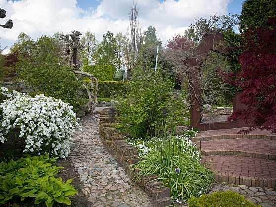 Hroznovec hroznatý – jemná krása do zahrad (Zdroj: Daniela Dušková)