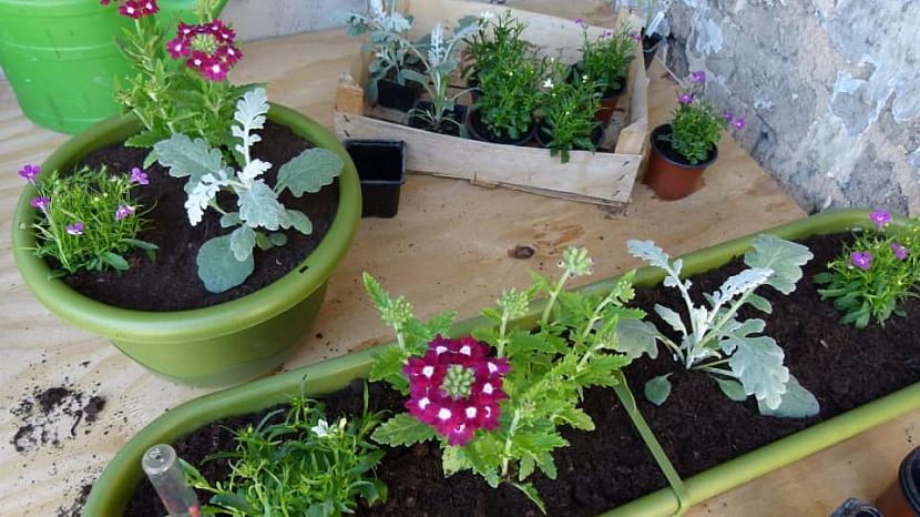 Jak zařídit, abychom měli na oknech v truhlíku krásně rozkvetlé květiny po celé léto 9