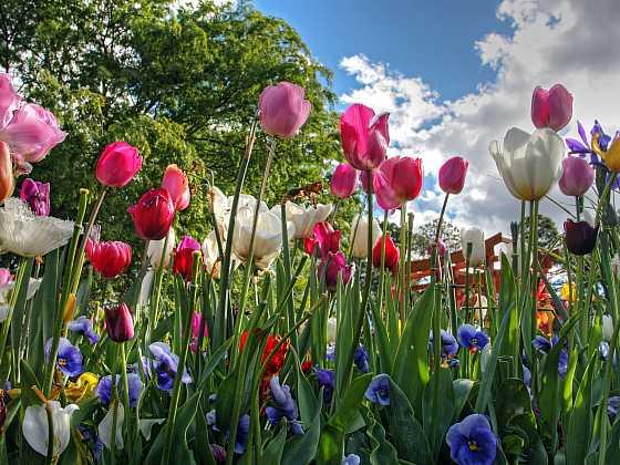 Venkovská kvetoucí zahrada má své neopakovatelné kouzlo (Zdroj: Depositphotos)