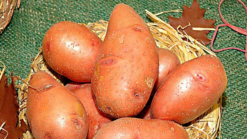 Pěstování brambor: odrůda Rosara