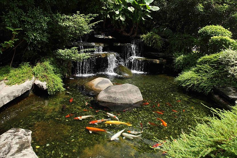 Kaskádovitý vodopád, rybníček s rybami