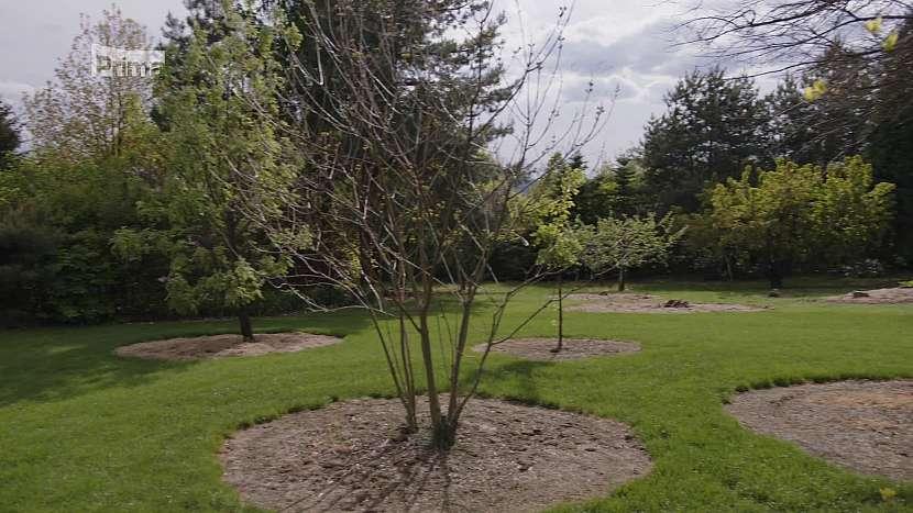 Vzrostlé stromy zabezpečují přirozené mikroklima a v kořenech zadržují vodu