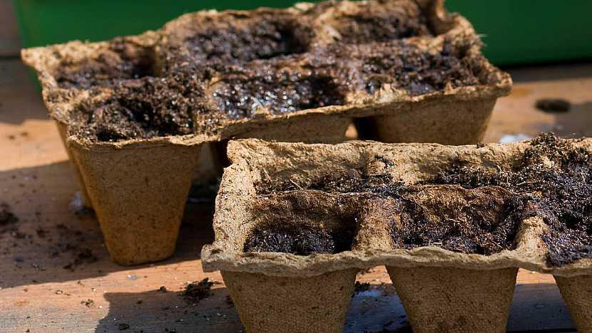 Výsev fazolí: předpěstujete si sazeničky fazolí
