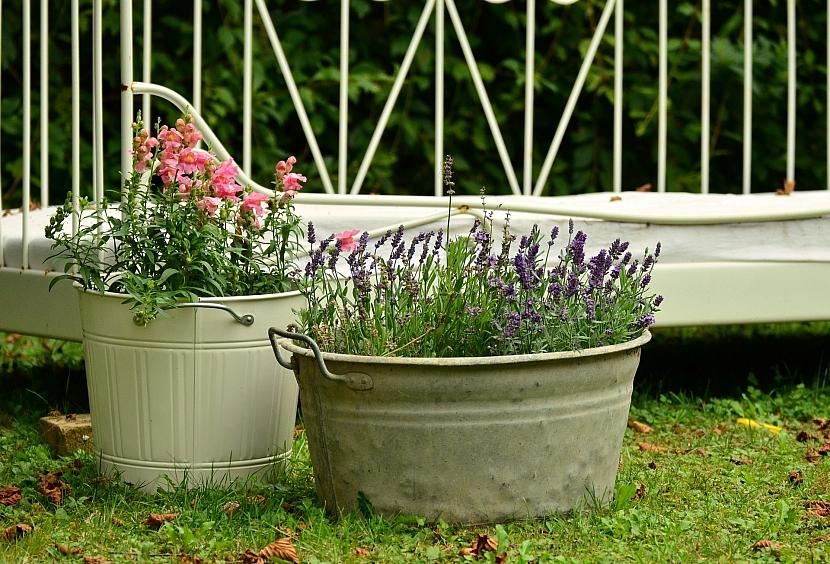 Kalendář pro zahradníky: Hledíky a levandule v přenosných nádobách