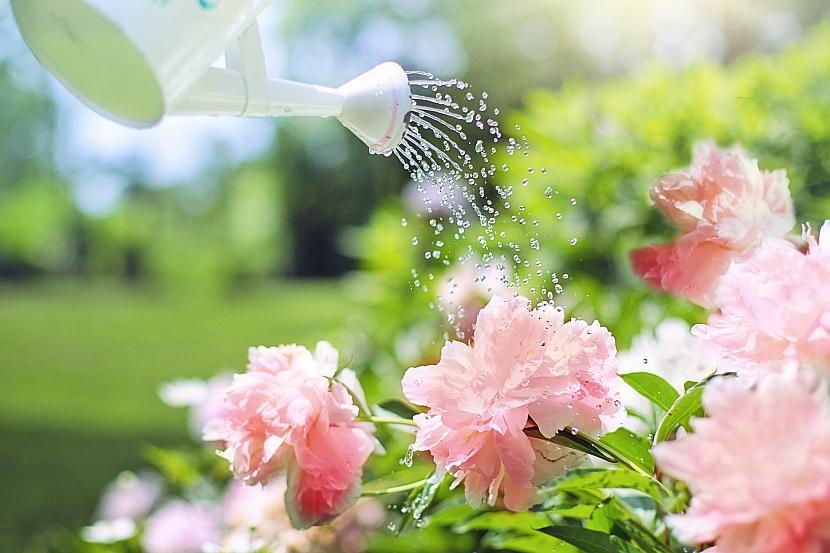 Kalendář pro zahradníky: zalévejte ráno či večer