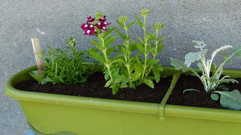 Jak zařídit, abychom měli na oknech v truhlíku krásně rozkvetlé květiny po celé léto 1
