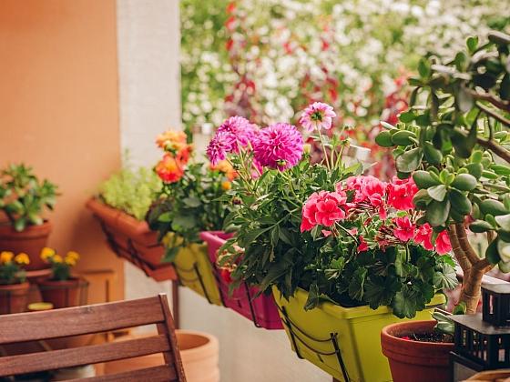 Květinové truhlíky k zavěšení, zde muškáty s jiřinkami (Zdroj: Depositphotos.com)
