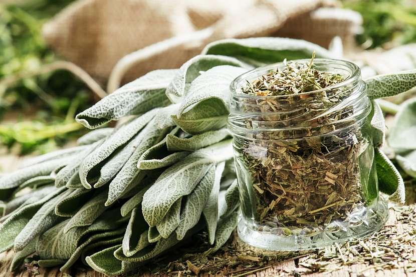 Sušení představuje nejsnadnější a nejčastější způsob konzervace bylin