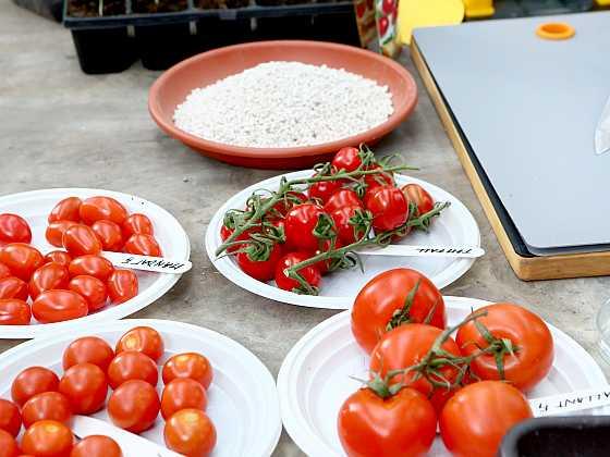 Na Josefa vysejte rajčatová semínka (Zdroj: archiv FTV Prima)