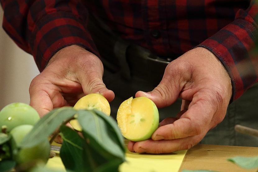 Tomel, exotický stromek, který plodí oblíbené ovoce, kaki 2