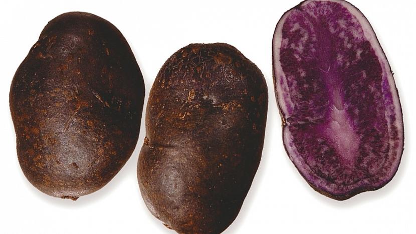 Brambory: speciální poloraná až polopozdní odrůda VALFI