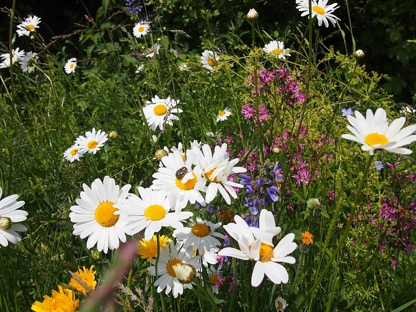 Květnatá louka je půvabným záhonem lučních květin