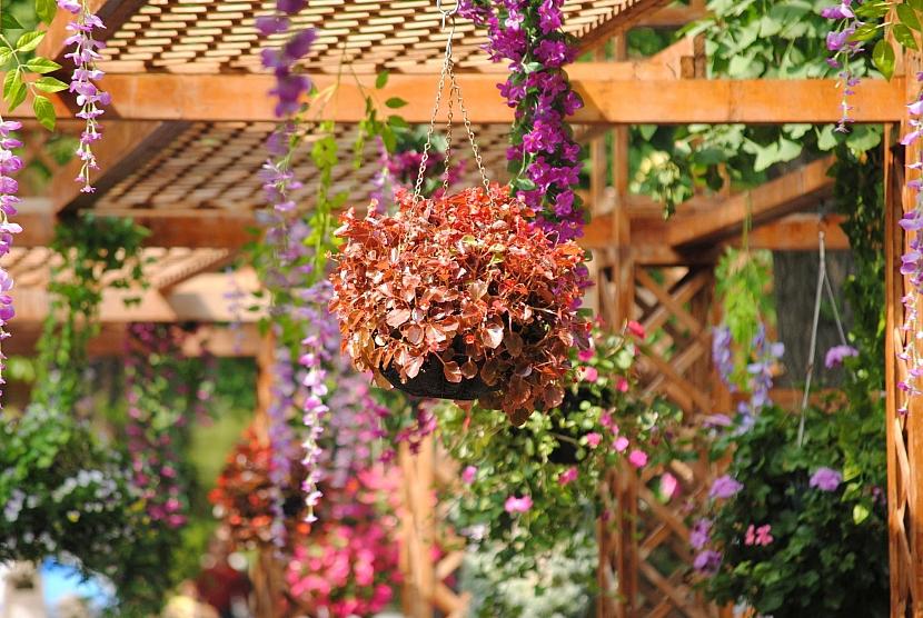 Květiny ozdobí pergolu