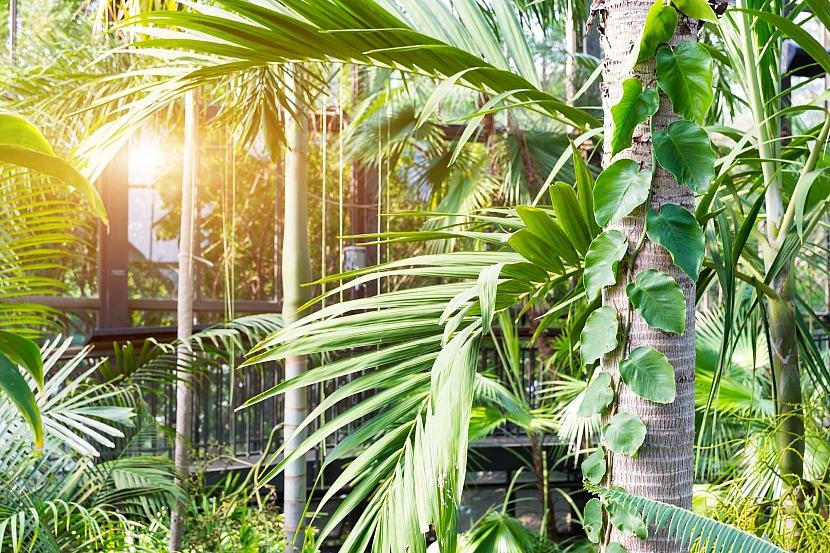 Stínění rostlinami