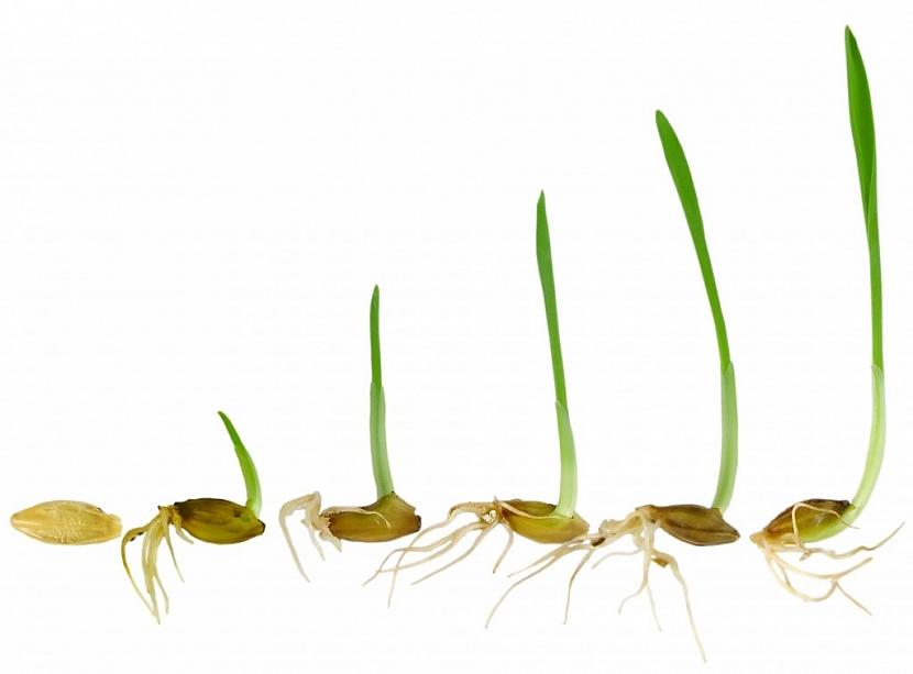 Zdravá semena