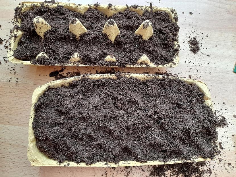 Přenoska na vejce naplněné substrátem