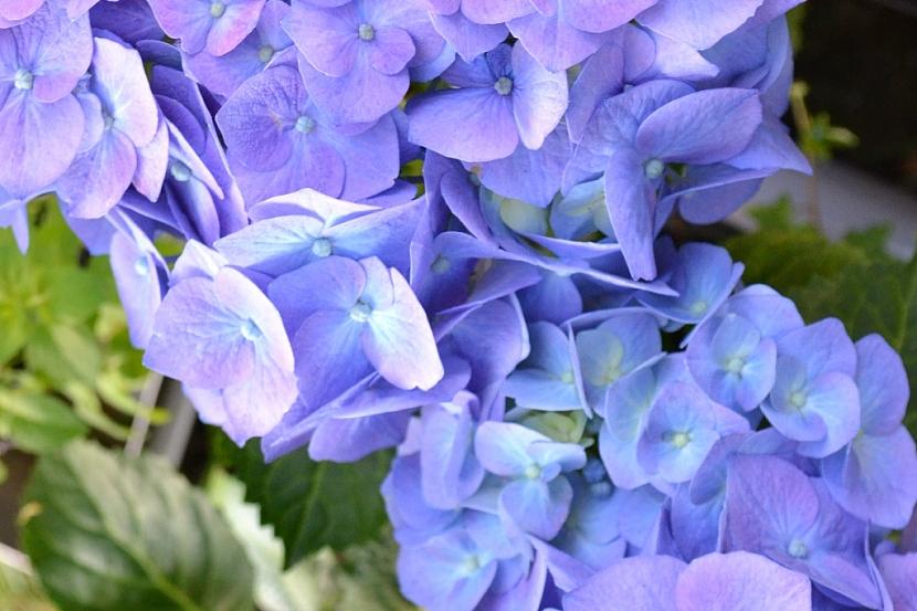 Jak pěstovat na balkoně květiny, i když se vám v tom alergie snaží zabránit 3