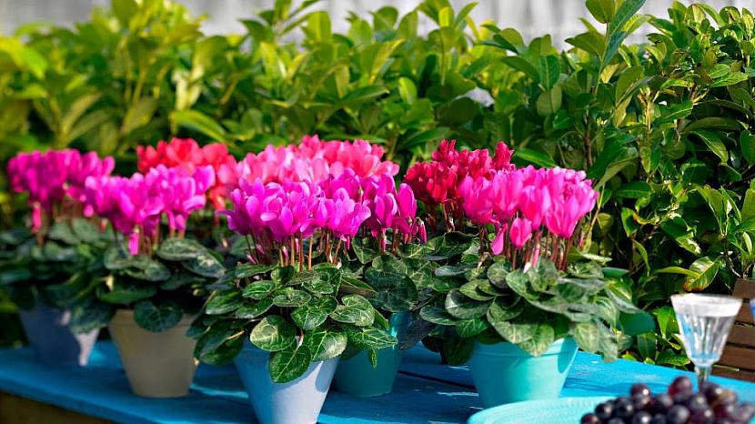 Jak můžete vyzdobit balkon méně tradičními květinami 2