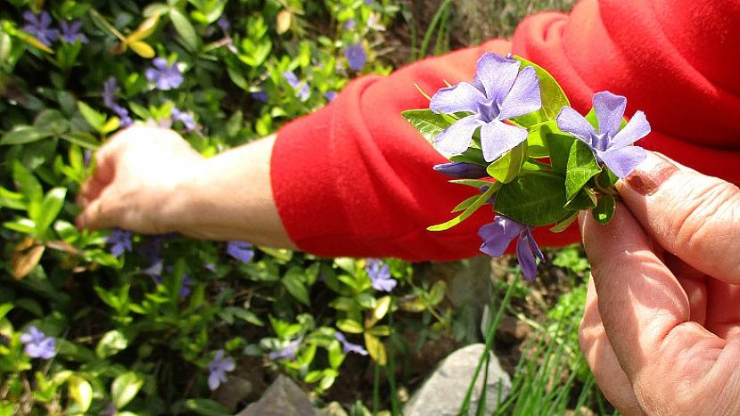 Jak se dá udělat malý zázrak aneb Když vám pod rukama rozkvete kámen 2