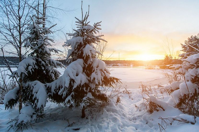 Sníh pod stromy