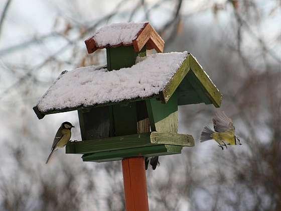 Inspirujte se a vyrobte si vlastní originální krmítko pro ptáčky (Zdroj: Depositphotos (https://cz.depositphotos.com))