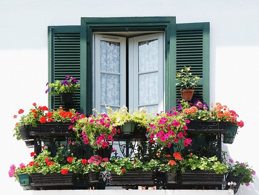 Truhlíky můžete osázet okna