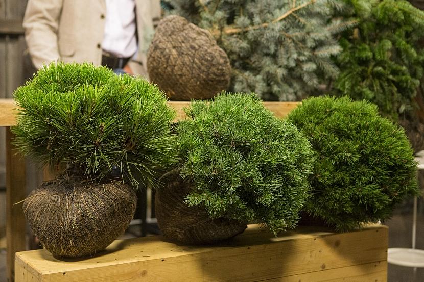 Výsadba dřevin má svá pravidla aneb Co vysazovat na podzim a co na jaře 1