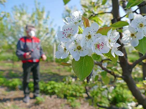 Bez postřiků ovocných stromů se neobejdeme (Zdroj: Depositphotos)