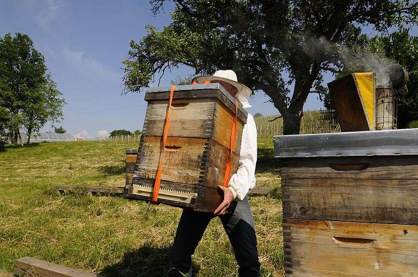 Včelař, úly
