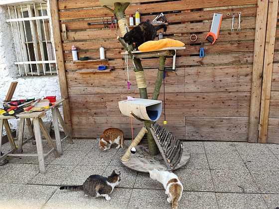 Vyrobte vašim kočkám kočičí strom, škrabadlo s prolézačkou (Zdroj: Pavel Kutil Zeman)