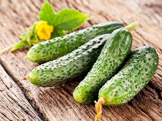 Okurky jsou oblíbenou chutnou zeleninou (Zdroj: Depositphotos)