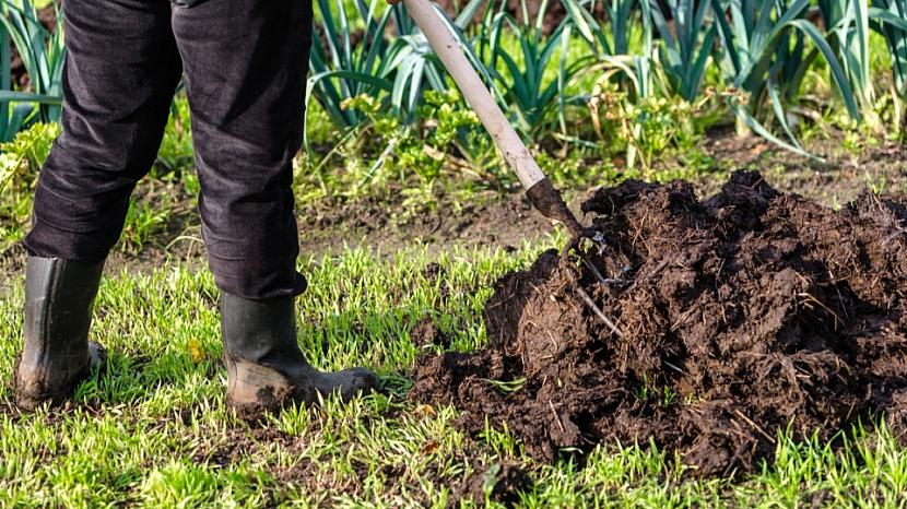 Jak připravit zahradu na zimu: budete-li pěstovat rostliny první tratě (rajčata, okurky, květák, zelí, celer), použijte chlévský hnůj