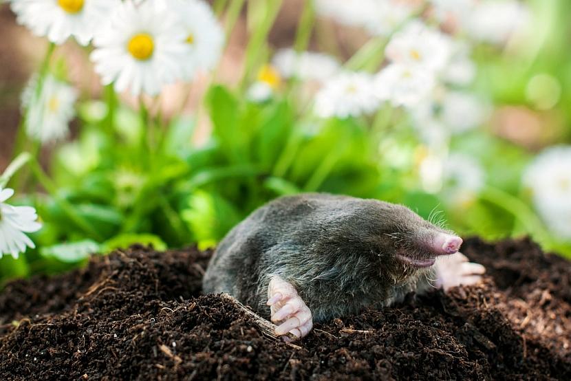 Krtek v zahradě